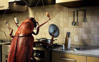 Как избавиться от тараканов в доме: полезные советы и эффективные средства