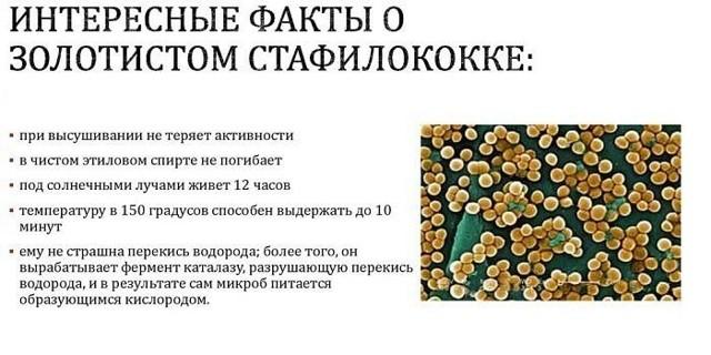 Золотистый стафилококк в горле: симптомы, лечение
