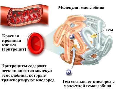Гемоглобин повышен у взрослого, о чем это говорит? Причины повышенного гемоглобина у взрослого человека