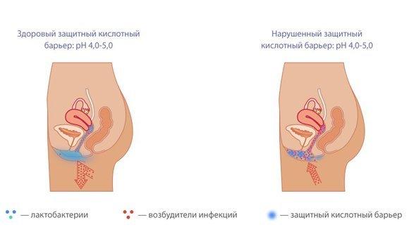 Лактонорм свечи: инструкция по применению, цена, отзывы, аналоги вагинальных капсул Лактонорм