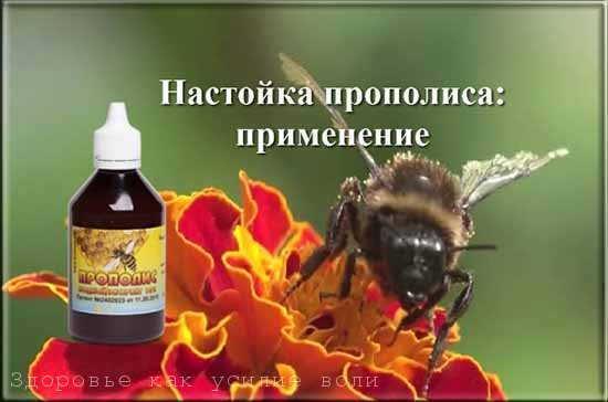 Настойка Прополиса на спирту: инструкция по применению, лечебные свойства, противопоказания, отзывы