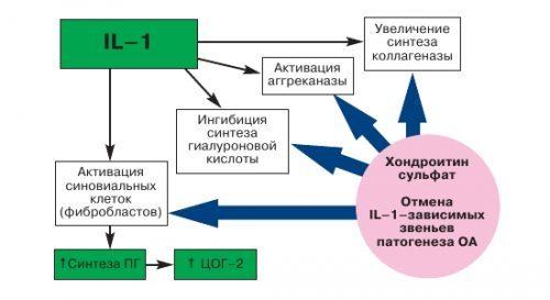 Хондроитин: инструкция по применению, цена, отзывы, аналоги капсул Хондроитин