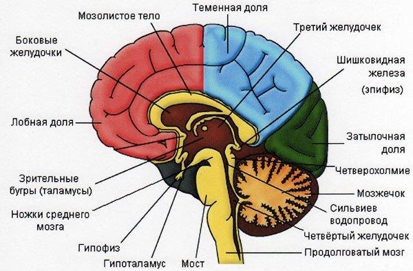 Отек мозга: прогноз для жизни, причины, последствия, способы лечения