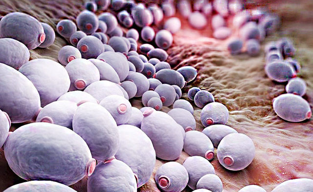 Нистатиновая мазь: инструкция по применению, цена, отзывы, аналоги мази Нистатин