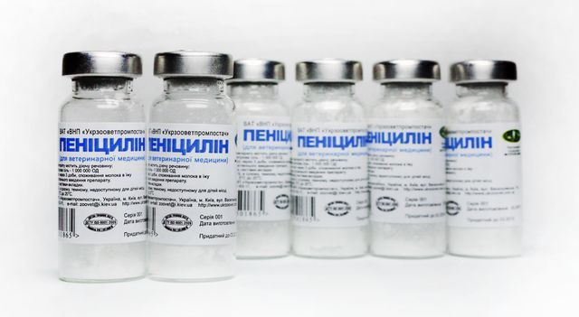 Как выглядит сифилис