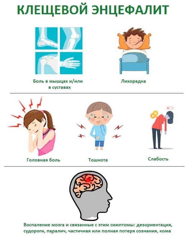 Укус клеща у человека: симптомы, через какое время проявляются, признаки, последствия. Что делать, если укусил клещ