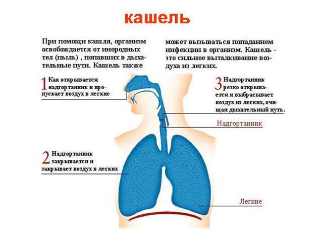 Сухой кашель у ребенка: что делать, чем лечить сильный лающий кашель