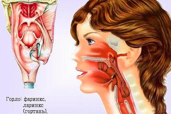 Рак горла: симптомы, фото, лечение, признаки рака горла на ранних стадиях у женщин и мужчин