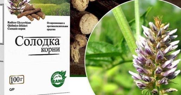 Сироп корня Солодки: инструкция по применению, цена, отзывы, показание и применение у детей