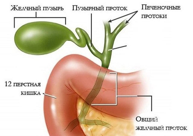 Острый холецистит: симптомы, лечение острого холецистита
