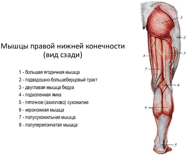 Почему болят колени: причины, что делать. Боль в колене сзади при сгибании: лечение