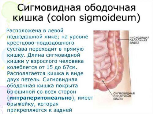 Боль внизу живота у женщин внизу слева, причины тянущих, резких, колющих болей слева